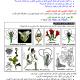 درس علوم الحياة والأرض: التوالد الجنسي عند النباتات الزهرية - جذع مشترك علوم