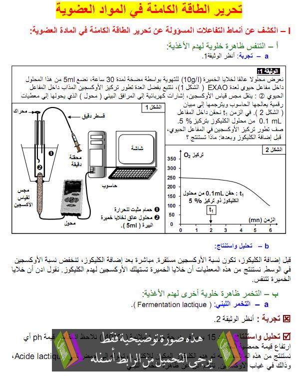 التفاعلات المسؤولة عن تحرير الطاقة الكامنة في المادة العضوية