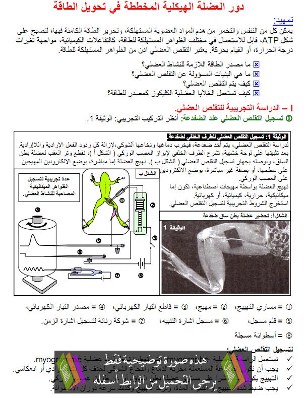 درس دور العضلة الهيكلية المخططة في تحويل الطاقة - علوم الحياة والأرض - الثانية باكالوريا علوم زراعية